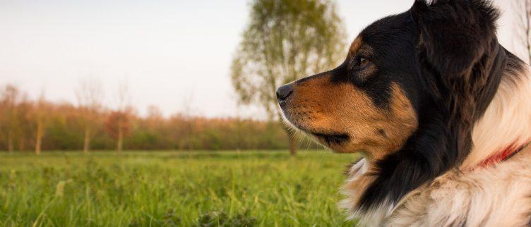 Op vakantie met je hond; diverse bestemmingen en tips