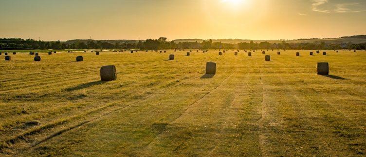 Waar kun je in Nederland logeren bij de boer?