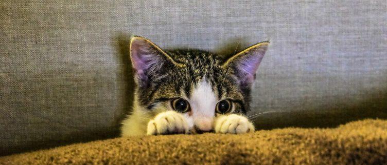 Wat kost een kat?