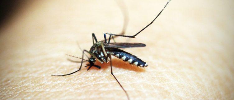 Wat moet je doen als je last hebt van een muggenplaag in of om je huis?