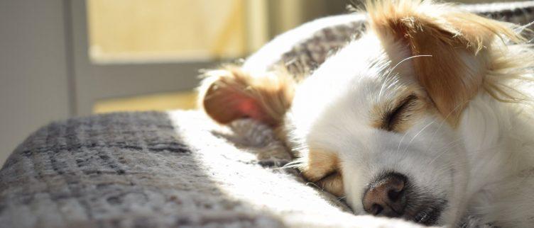 Waar kun je overnachten met een hond in Nederland?