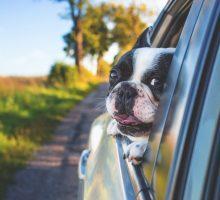 afsluiten hondenverzekering