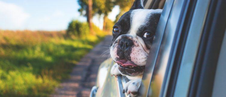 Waar let je op bij het afsluiten van een verzekering voor je hond?