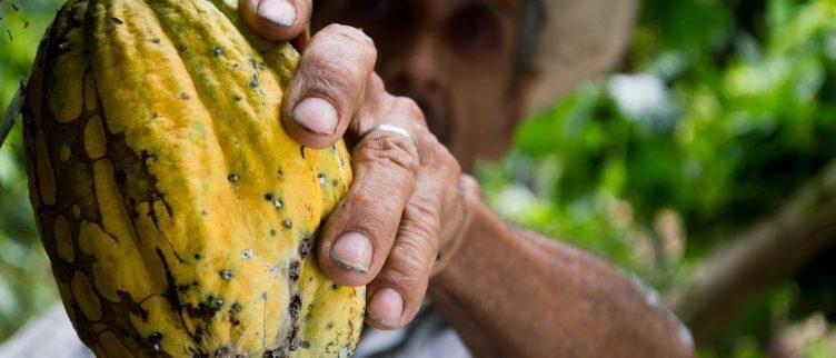 7 redenen om cacao (aandelen) te kopen
