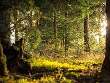 Wat is het mooiste natuurgebied in Nederland?