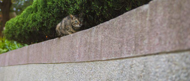 9 tips om katten uit je tuin te houden