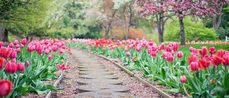 Hoe kun je online een tuin ontwerpen?