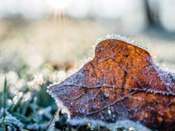 10 Tips voor een mooie wintertuin