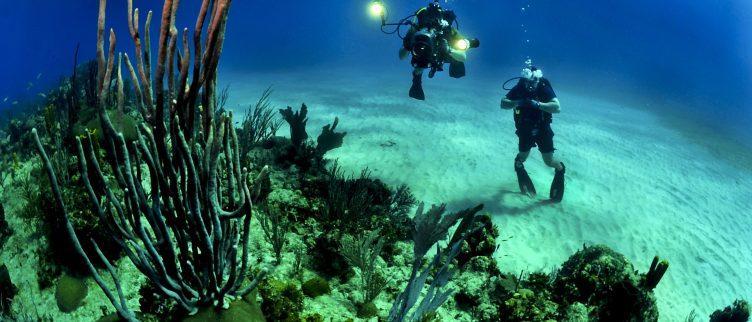 De beste plekken in de wereld om te duiken