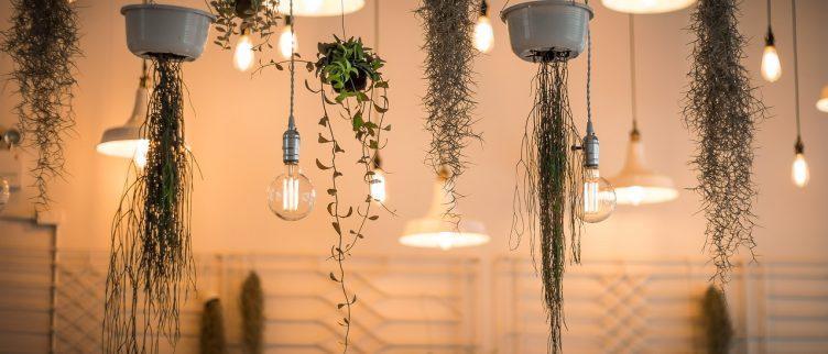 Wat zijn je opties voor een verticale tuin in huis?