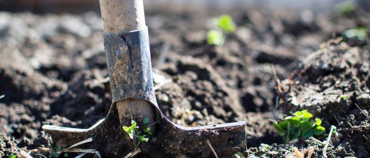Tips om je tuin winterklaar te maken