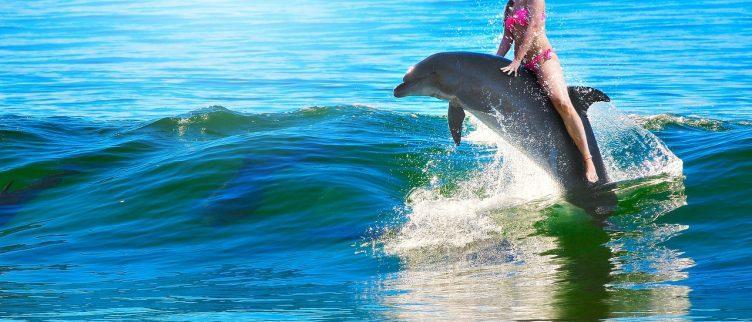 8 plekken waar je kunt zwemmen met dolfijnen
