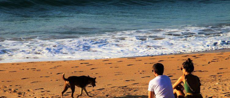 15 tips voor vakantie met je hond aan zee