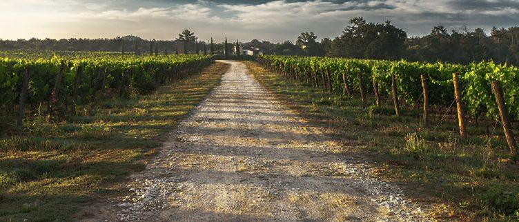6 keer inspiratie voor een wijnreis