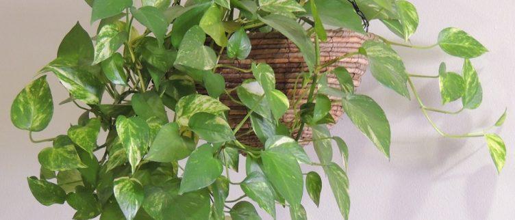 10 tips voor planten aan de muur