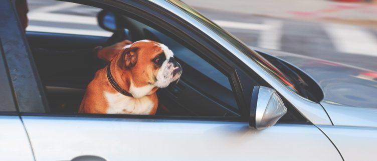 7 tips voor reizen en vakantie met je huisdieren