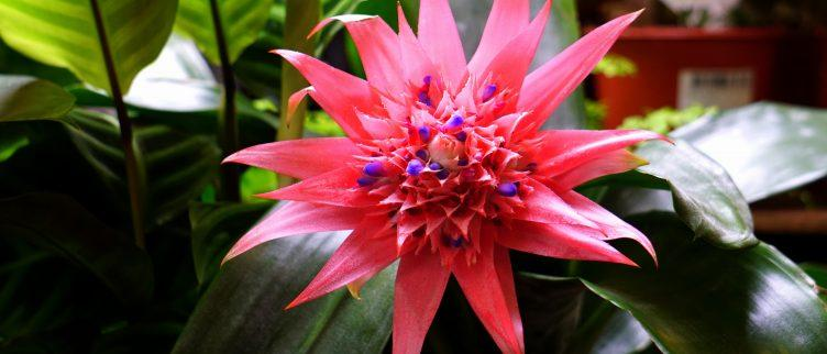 Wat zijn de mooiste botanische tuinen van Europa?