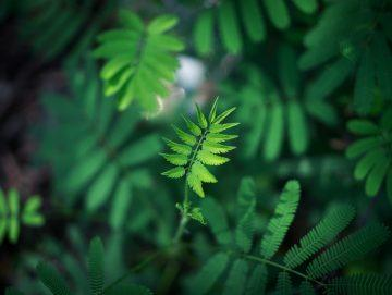 6 Tips om planten te determineren