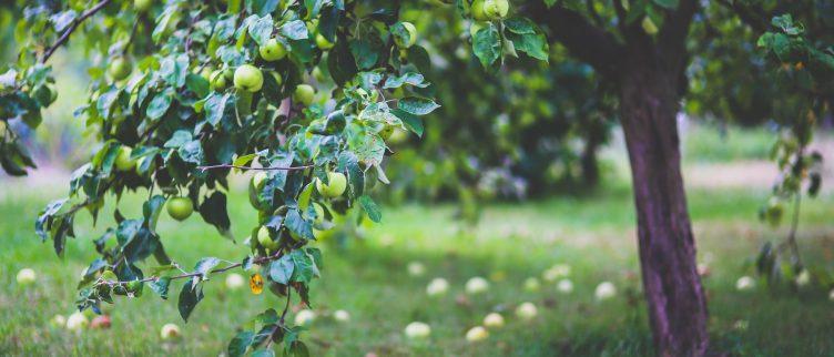 Pluktuinen; waar in Nederland kun je fruit plukken?