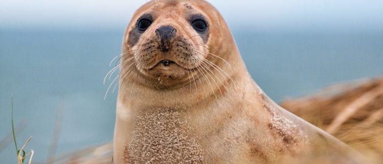 Waar in Nederland kun je zeehonden zien?