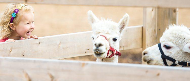 De 11 grootste kinderboerderijen in Nederland