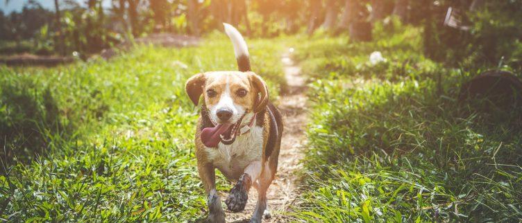 Alles wat je moet weten over een dierenverzekering
