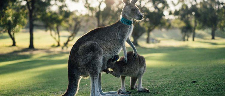 Wat is de beste reistijd voor Australië?