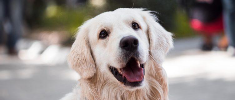 10 Kadotips voor (iemand met) een hond
