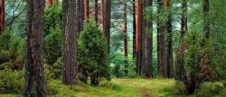 Overnachten in het bos. 6 Unieke plekken in Nederland
