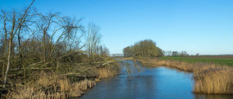 7 tips voor een rondvaart door de Biesbosch